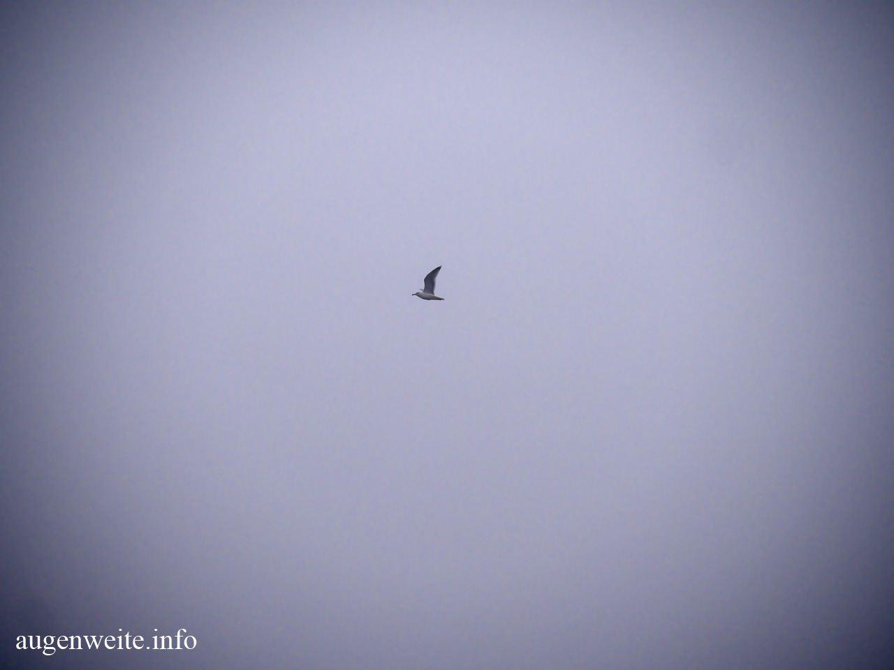 Möve im Nebel