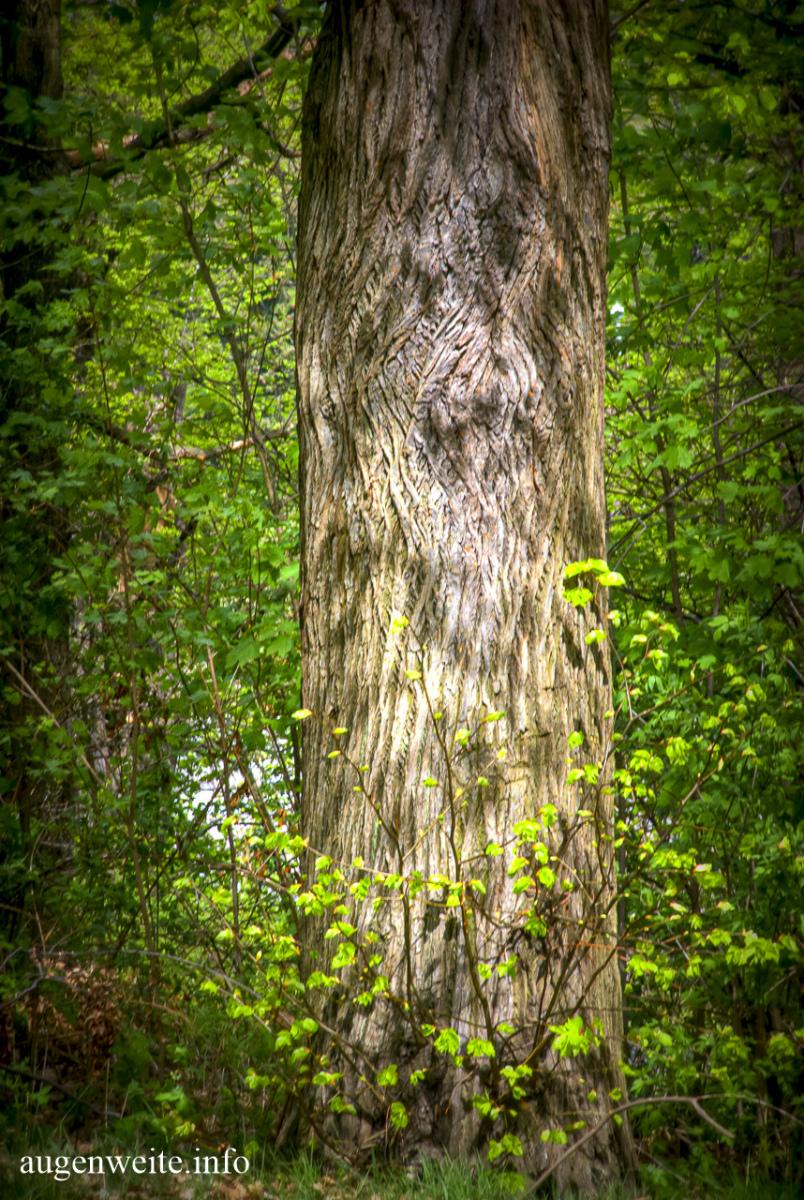 Fee im Baum
